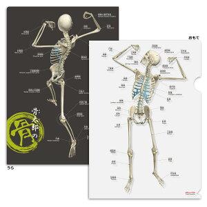 クリアファイル 骨 「骨太郎の骨 クリアファイル」 A4サイズ フルカラー 両面デザイン 解剖学 名称 名前 ふりがな付 送料無料
