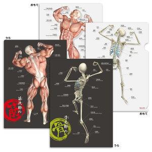 クリアファイル 筋肉 骨 「筋次郎の筋+骨太郎の骨 クリアファイルセット」 A4サイズ フルカラー 両面デザイン 解剖学 名称 名前 ふりがな付 送料無料