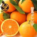 ◆木熟 清見オレンジ【送料無料】◆ 【優品 訳あり L/2L(中玉)サイズ 5kg】希少な樹上熟成 葉付き♪清見タンゴール …