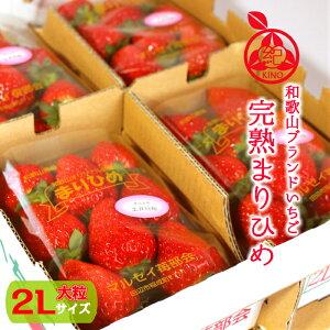 いちご 送料無料【完熟 まりひめ 大粒】 秀品 2Lサイズ 約12粒×4パック 約1.2kg高級いちご イチゴ 苺 高糖度 ギフト 贈り物 贈答用 プレゼントホワイトデー  誕生日 内祝 ケーキ作り 紀の