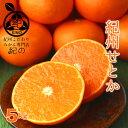 せとか 濃厚とろける甘味!◆ 【秀品 L/2Lサイズ(中玉から大玉) 5kg】【送料無料】最上級の食味!高級フルーツ!完熟 …