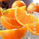 ◆紀州産 バレンシアオレンジ◆【送料無料】 【秀品 L/2Lサイズ 5kg】ギフトに最適です国産オレンジ ノーワックス …