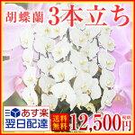 12,500円税別
