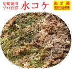 胡蝶蘭【水コケ】チリ産またはニュージーランド産