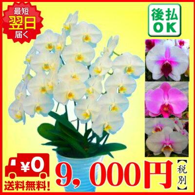 9,000円税別
