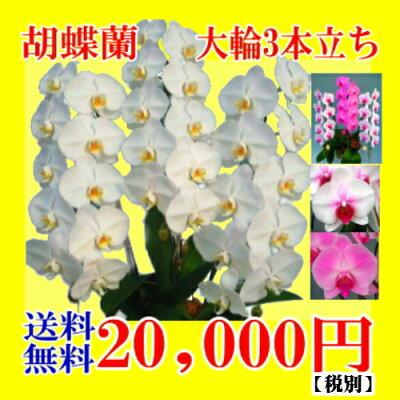 20,000円税別