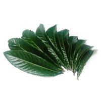 無農薬枇杷の葉(びわの葉)100g(枇杷の生葉10枚前後)