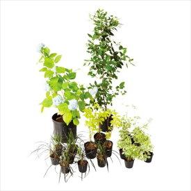 オンリーワン メインガーデン 植栽セット エレガント セイヨウアジサイ やさしい景色 WP6-SET05