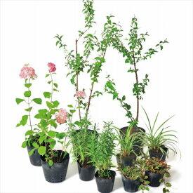 オンリーワン 彩で選ぶ 植栽セット カラー ピンクのアナベル 5感で選べるセット KJ6-SET08
