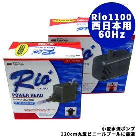 小型水流ポンプ Rio1100 [ 60Hz・西日本用 ] ( 1個 )幼稚園 祭り ハロウィン 景品 子供会 縁日