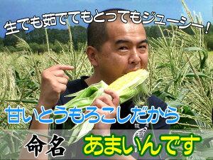 あまいんです6本セット甘すぎるとうもろこし【甘いんです】北海道産直!朝もぎ、とうきび【6本】限定販売!生でも美味しいフルーツトウモロコシ♪スイーツコーン!産地直送トウキビ