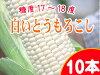 白色的玉米北海道产地直送!早晨摘下,限量销售toukibi!味道也直接好的水果玉米♪产地直送非洲稷!