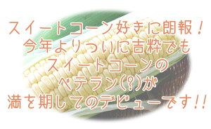 『味来』6本入り!ミラクルスイートコーン【北海道産直!朝もぎ、とうきび】イエロー種で人気のとうもろこしみらい!朝もぎ生でも美味しいフルーツトウモロコシミライ産地直送トウキビ