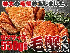毛がに550g2尾【ボイル毛蟹】特大の北海道産毛ガニ 蟹味噌が最高のカニ 三大蟹の1つのけがに ボイル毛蟹 送料無料
