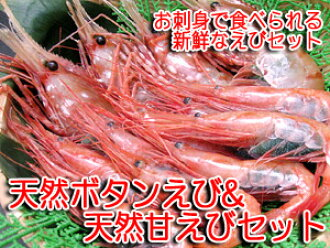 Natural spot prawns 500 g & natural deep-water shrimp fresh Botan shrimp to eat sashimi set in 500 g «Botan shrimp» and sweet shrimp [AMA EBI»