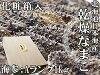 含乾燥海參A級品1kg化妝盒的北海道生產乾燥namako錢n孩子幹海參!北海海參海參!!在海參皇幹shinamako海的中醫禮物以及禮物1000g