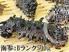 乾燥海參B級品500g北海道生產乾燥namako錢n孩子幹海參!北海海參海參!!海參皇幹shinamako海的中醫