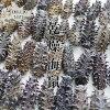 乾燥海參A級品100g北海道生產乾燥namako錢n孩子幹海參!北海海參海參!!海參皇幹shinamako海的中醫