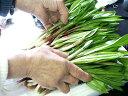 生行者にんにく(ぎょうじゃ)【1kg】送料無料!天然100%!北海道の野山に群生!幻の山菜!行者ニンニク※4月中旬頃から収穫出来次第順次発送致します