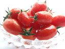 フルーツミニトマト『アイコ』2kg【北海道産】♪平均糖度8度以上♪送料無料!※只今、発送中!