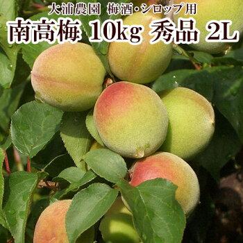【大浦農園】【梅酒用】紀州南高梅10kg(2L/秀品)