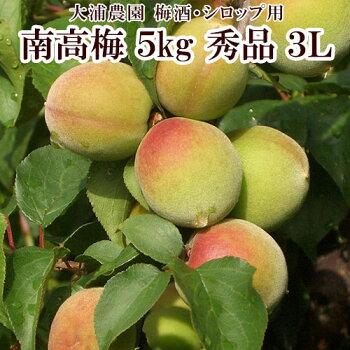 【大浦農園】【梅酒用】紀州南高梅5kg(3L/秀品)