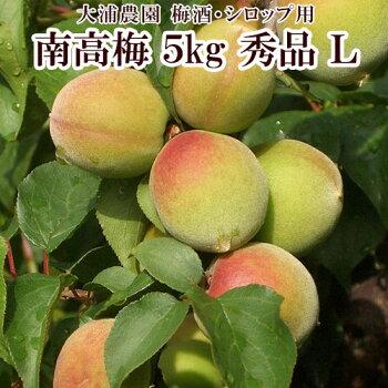【大浦農園】【梅酒用】紀州南高梅青梅5kg(L/秀品)