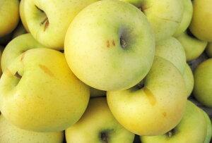 【訳ありリンゴ】甘味と酸味の絶妙なハーモニー!リンゴ通の方に人気の「シナノゴールド」自家用ランク 約5kg(10〜23玉)収穫&発送は10月20日過ぎ頃から順次発送 【送料無料(一部地域は