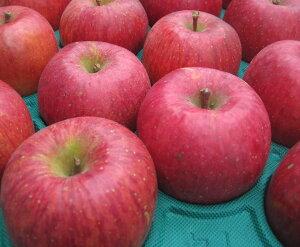 【訳ありリンゴ】太陽の味覚!無袋栽培の「サンふじ」ご家庭向き 約10kg箱 収穫&発送は11月25日過ぎ頃から順次発送予定!(気象条件等により収穫が前後するのでご了承ください)【送料無