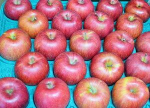 【訳ありリンゴ】信州で誕生した甘くジューシーなりんご!「ポケットサイズのシナノスイート」自家用に最適!食べきり小玉サイズ約10kg(40〜50玉)収穫&発送は10月5日過ぎ頃から順次発