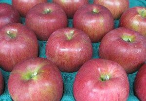 【訳ありリンゴ】信州で誕生した甘くジューシーなりんご!「シナノスイート 自家用ランク約10kg(20〜40玉)収穫&発送は10月5日過ぎ頃から順次発送【送料無料(一部地域は有料)】