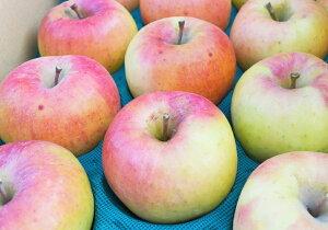 【訳ありリンゴ】フルーティーな甘味が特徴的で食べやすい!人気の黄色種りんご「名月」自家用ランク 約4.7〜5kg(10〜20玉)収穫&発送は11月10日過ぎ頃から順次発送予定!【送料無料(一