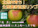【送料無料】【訳ありリンゴ】フルーティーな甘味が特徴的で食べやすい!人気の黄色種りんご「名月」自家用ランク 約3kg(6〜12玉)