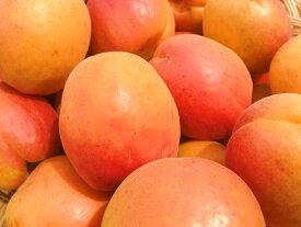 2019年産予約受付中!【送料無料】信州の初夏の特産品! 生食に最適な甘くて皮ごと食べられる杏「ハーコット」秀ランク 約1.5kg箱