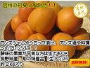 【送料無料】生食や杏酒、シロップ漬けなどの加工品にも最適な「長野県産 生アンズ 約2kg箱」