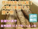 【送料無料】信州の秋の味覚!今年は10月下旬から順次発送! 特産・秋堀り長芋 中級ランク 贈答&自家用向き 約5kg3〜6本入り