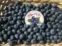 【送料無料】長野県産 減農薬栽培で生食や加工品にも最適な「生ブルーベリー 約1kg箱」