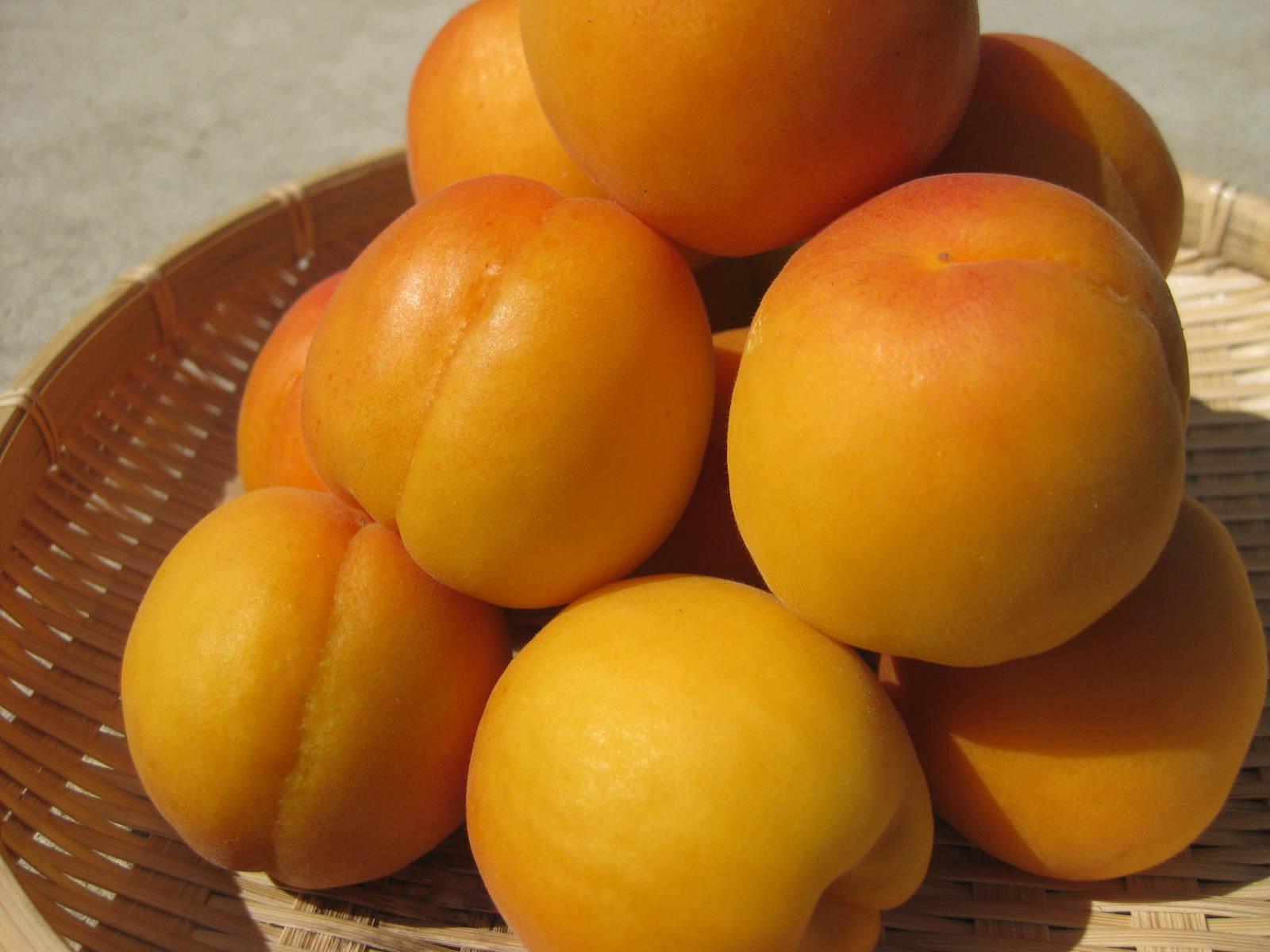 【送料無料】硬めのアンズで主に杏酒に最適な「長野県産 生アンズ 約2kg箱」