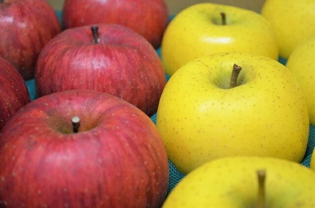 【送料無料】生産農家直送 園主お勧め2〜3品種詰め合わせ「信州産 旬の訳ありりんご 」自家用ランク約3kg(6〜12玉)
