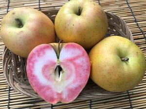 信州産 生産農家直送 訳ありりんご 「なかののきらめき&サンふじ」ミックス ご家庭向き 10〜25玉 約4.5〜5kg入り/箱 2品種が楽しめるセット!生食もOKですし、ジャム・ジュース・りん