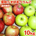 【ポイント10倍】りんご 訳あり 10kg 送料無料 40玉前後 令和2年度 青森県産 葉取らずりんご 蜜入り お得用 自宅用に …