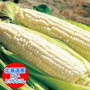 北海道産 ピュアホワイト・ホワイトショコラ 北海道産の白いとうもろこし「ホワイトコーン」Lサイズ 生でもOK!ゆでて…