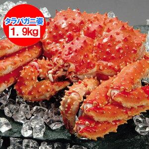 タラバガニ 姿 たらば蟹の姿 たらばがにを存分に堪能できるボリュームの浜ゆでたらば蟹 姿 1尾/約1.9kg 価格 19800円 ボイル たらばがに 姿