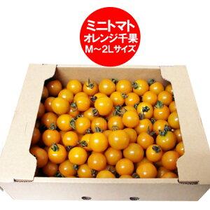 訳あり トマト 送料無料 ミニトマト 北海道 ミニ トマト M〜2Lサイズ 2kg(2キロ) 価格 2980円 トマト/とまと 無撰別 品種 オレンジ 千果
