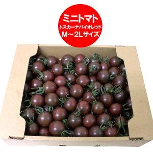 訳あり トマト 送料無料 ミニトマト 北海道 ミニ トマト M〜2Lサイズ 2kg(2キロ) 価格 2980円 トマト/とまと 無撰別 品種 トスカーナバイオレット