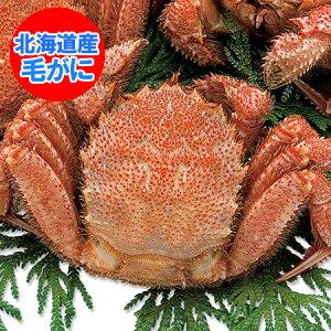 けがに 北海道産 毛蟹 送料無料 毛ガニ 特大 浜茹で毛がに 1kg(1000 g)×1尾 価格10800円