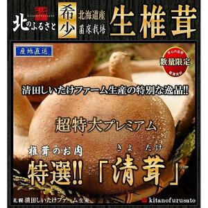 札幌 清田産 生椎茸 超特大 プレミアム 清茸 3Lサイズ 2玉 (1パック) 産地直送 有明の名水 高級 椎茸 シイタケ しいたけ 肉厚 ビック