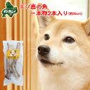 鹿 角 犬 北海道産 エゾ鹿 の 角ガム デンタルケア 1本物25cm×2本入 高たんぱく質&低脂肪・低カロリー 無添加 えぞ…