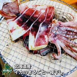 【北海道産】イカのまるごと一夜干し【食べ応え抜群!】