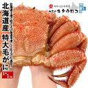 毛ガニ 特大 1kg 北海道産 1尾入 送料無料 毛がに 毛蟹 かに カニ 蟹 ka1